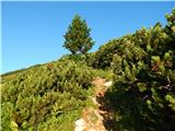 Podnar / Bodenbauer - Ovčji vrh (Kozjak) / Geissberg (Kosiak)