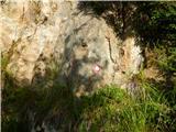 Črnivec - lepenatka