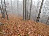 Molnarjev breg - kamniski_vrh