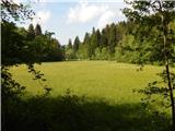 Šujica (Na Gmajni) - tosko_celo