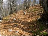 Vrh Bače - savnik