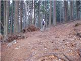 Urbas - Bivak na Belščici