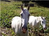 Kozji hrbet - savnik