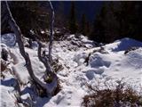 Stara Fužina - prsivec