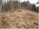 Zabukovica - gozdnik