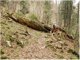 Tomčeva koča na Poljški planini - begunjscica