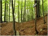 Gozd Martuljek - zgornji_martuljkov_slap
