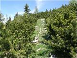 Kraljev hrib - koritni_vrh_velika_planina
