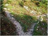 Planina Storeča raven - vogel
