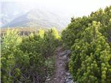 Jezerski vrh - pristovski_storzic___karntner_storschitz