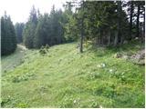 Planinska Ravna - boskovec