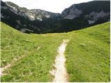 Planina Jezerca - planina_koren