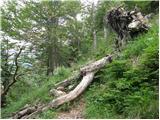 Cave del Predil - Kraljevska špica/Monte Re