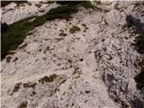 Lovska koča na Brežičih - planjava