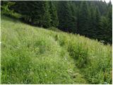 Erjavčev rovt - planina_dovska_rozca