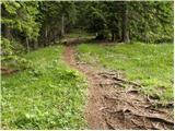 _erjavcev_rovt - Planina Dovška Rožca