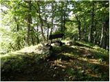Črni Kal - mladi_vrh