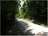 Borovnica - mali_trebelnik