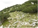 Medvedova konta - debeli_vrh_nad_lipanco