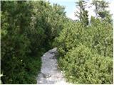 vrsic - Slemenova špica