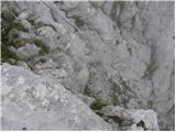 Loška Koritnica - mangart