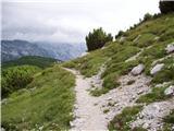 Dom na Gospincu - vrh_korena