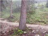 Pri Rupah - lipanski_vrh