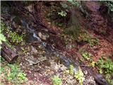 Gozd Martuljek - Kurji vrh