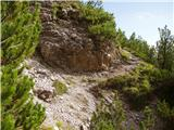 Gozd Martuljek - kurji_vrh