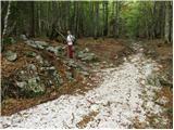 Javorje - planina_suha