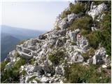 Rutarski gozd - raskovec