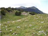 Planina Zapleč - krasji_vrh