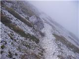 Planina Kuk - vogel