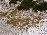 Planina Ravne - Veliki vrh (Veža)