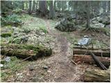 Gozd Martuljek - rutarski_vrsic