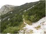 Rutarski gozd - jehlc_spicasta_kupa