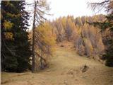 Zapornica (Belca) - visoki_vrh