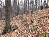 Prvine - koca_na_cemseniski_planini