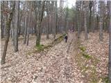 Sotina - cincev_breg