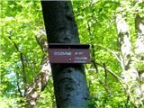 Na drevesu (slika je približana)