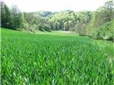 Pot po Svečinskih goricahUžitek je potekavati po tem zelenilu ...