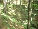 Beli potok pri Frankolovem - Špicasti  vrh (Kislica)