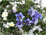 Tudi cvetje se je našlo.
