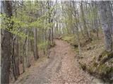 Lesično - brest_bohor