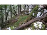 Lepa polica v strmini in ozkem grlu drevoreda