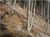 Koroška Bela (RC Kres) - planina_stamare