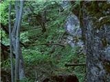 Želeče (Bled) - Straža