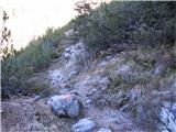 Creta di Rio Secco (2203)sveže obžagano rušje na poti
