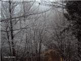 Kojca (1303m)nazaj v mrazu