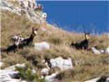 Creta di Timau in Cima Avostanisprav veliko ljudi v teh koncih ne vidijo